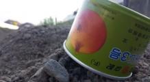 玉ねぎ植え1